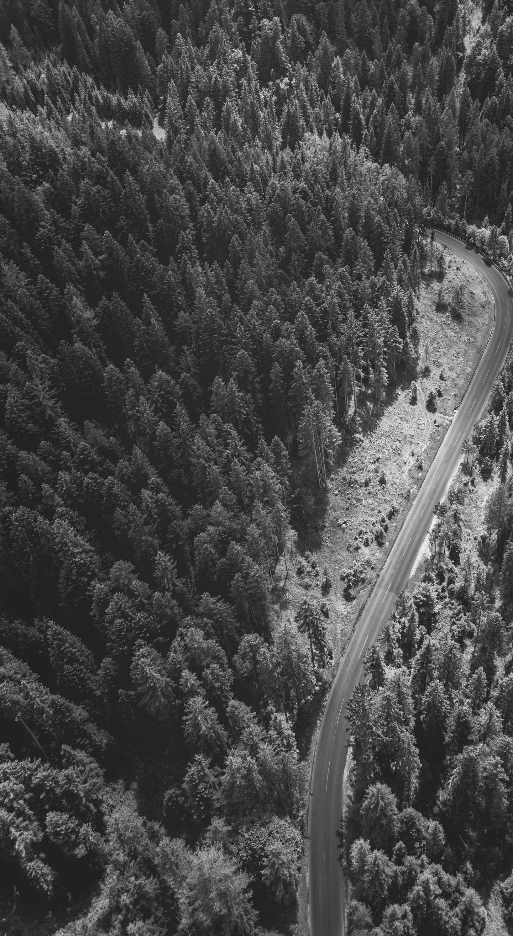 TGS Baltic sėkmingai apgynė Valstybinių miškų urėdijos interesus